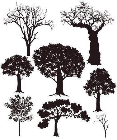 foglie di quercia: albero silhouette Vettoriali