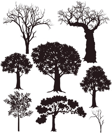 willows: tree silhouettes