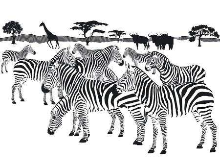 steppe: herd of zebras Illustration