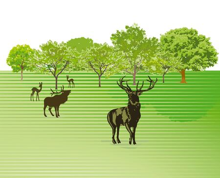 wild venison: Deer on the green meadow