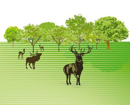 venison: Deer on the green meadow