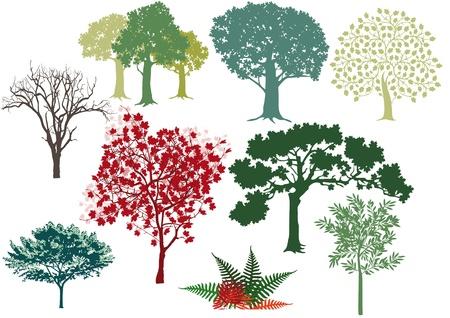 set di alberi a foglia caduca