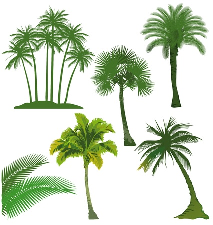 palm oil: set of palm tree