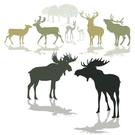 moose antlers: Elk, deer and fawn Illustration