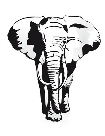siluetas de elefantes: elefante Vectores