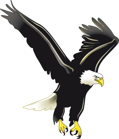 swooping: eagle
