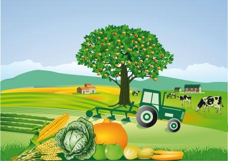 tractores: La agricultura y la cosecha, acci�n de gracias Vectores