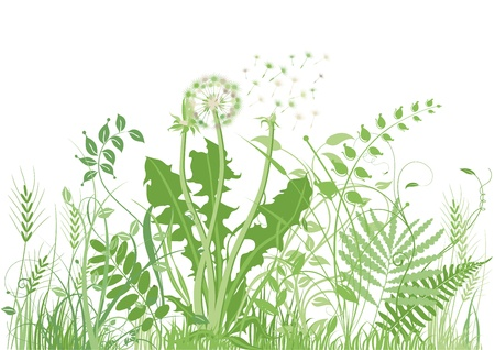 green meadow Vector