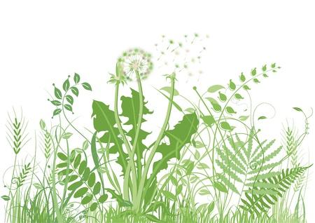 groene weide