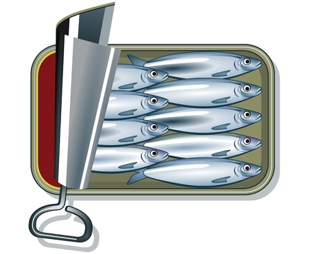 sardines in oil  Vector