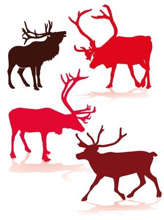 lapland: reindeer