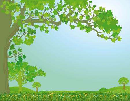 flower fields: spring meadow
