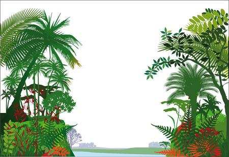 rainforest: tropical rainforest Jungle