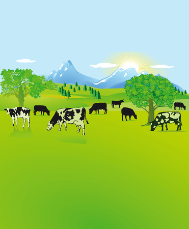 calving: Mountain landscape with black, white cows  Illustration