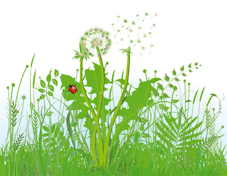 Grasses and meadow