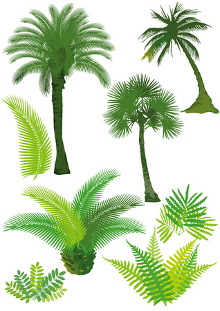 Palms and ferns