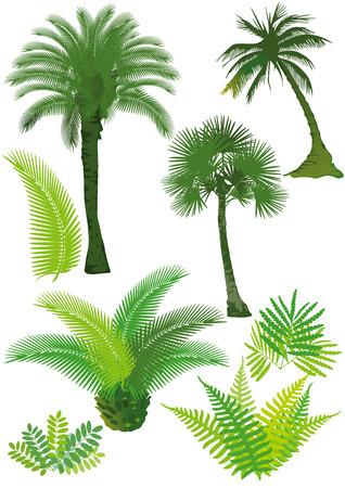 helechos: Las palmas y helechos