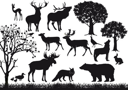 Forest and Wildlife  Vector