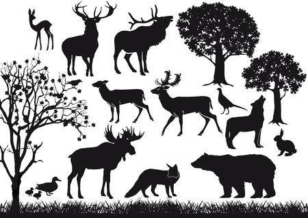 lepre: Foreste e fauna selvatica Vettoriali