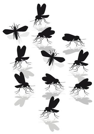 irritation: mosquitoes plague  Illustration