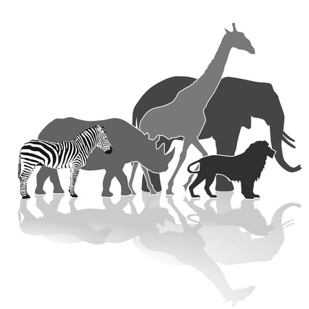 wildlife: African Wildlife Illustration