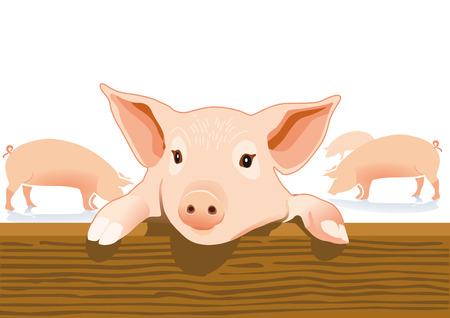 sniffing: pigsty