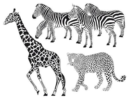 Leopard, Zebra, Giraffe  Vector