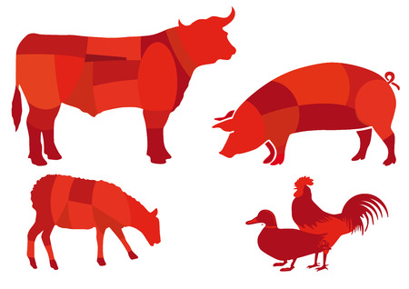 Beef meat  Vector