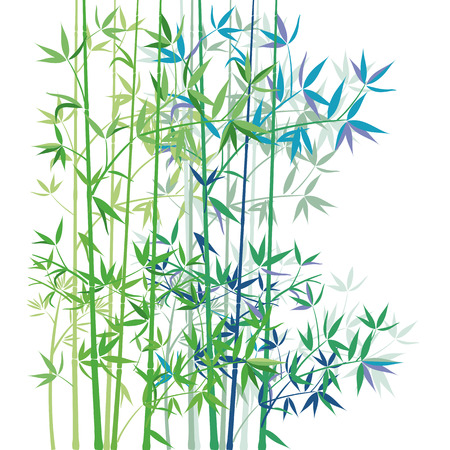 Bamboo on white background  Vector