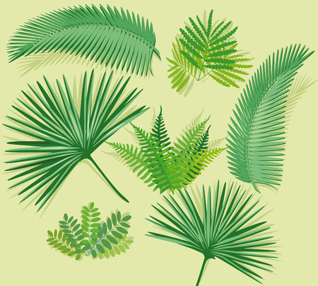 Palm frond with fern Vector