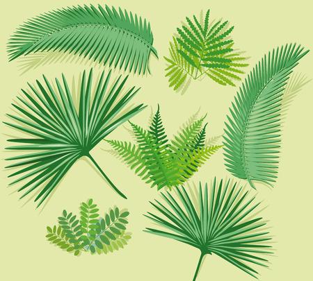 palm frond: Palm fronda con felce