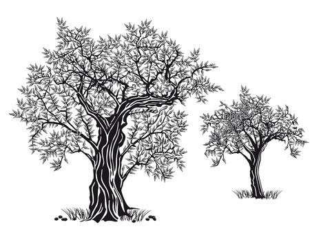 olive trees Vettoriali