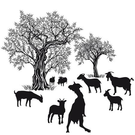 goat cheese: Goats on white background Illustration