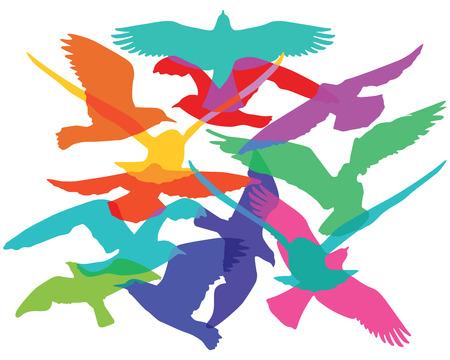 bandada de p�jaros: Bandada de aves