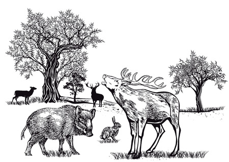 world heritage: Wild on the glade Illustration