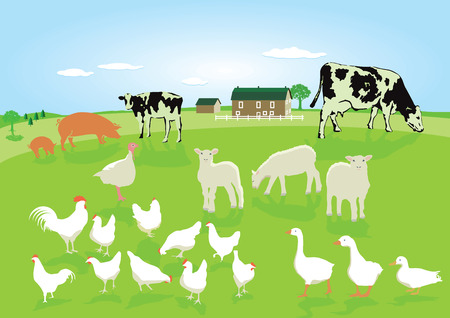 Animals in agriculture Illustration