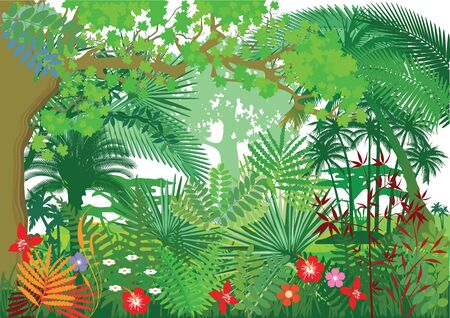 natural backgrounds: Rainforest Jungle