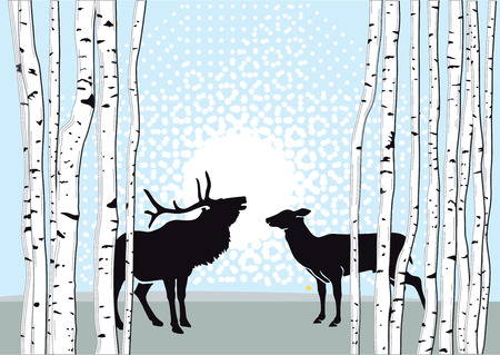 doe: Deer and Doe in Forest