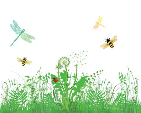 campo de flores: Abeja, libélula, mariquita, en la pradera, fondo blanco Vectores