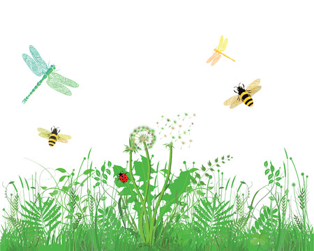 insect flies: Bee, Dragonfly, Ladybug, on meadow, white background