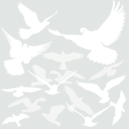 nonviolent: Birds fly in the air Illustration