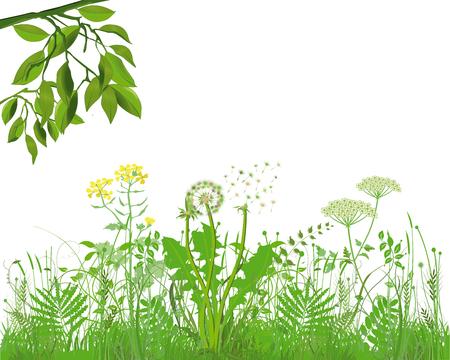 Grassen met kruiden en bloemen, illustratie