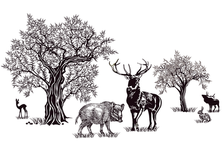 Deer and wild boar Ilustrace