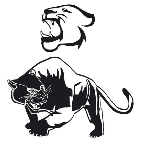 Leopard, panther graphic, illustration. Illusztráció