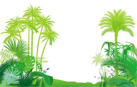 Jungle, Tropical Rainforest,