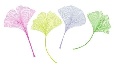 Ginkgo leaf vector illustration illustration on white