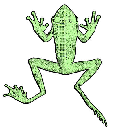 green frog, cut out vector illustration