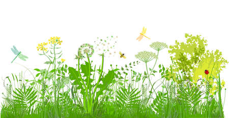 green grasses, plants and herbs with insects