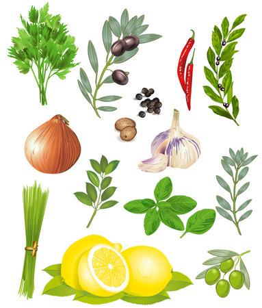 Spices and herbs - vector illustration Ilustracja