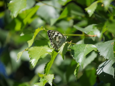 Brown butterfly with wings open and with plants